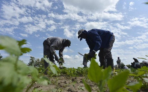 As migrant workers return to Ontario's fields, 'vaccinations will be the key' to preventing COVID-19 outbreaks