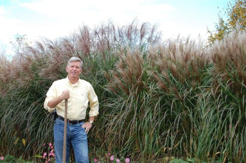 Hit new highs with ornamental grass