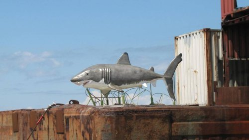 11-foot trophy shark now haunting a shipwreck off the SC coast — and it's not leaving