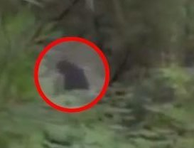 Mysterious footage shows 'Bigfoot' and two hairy babies roaming in woods