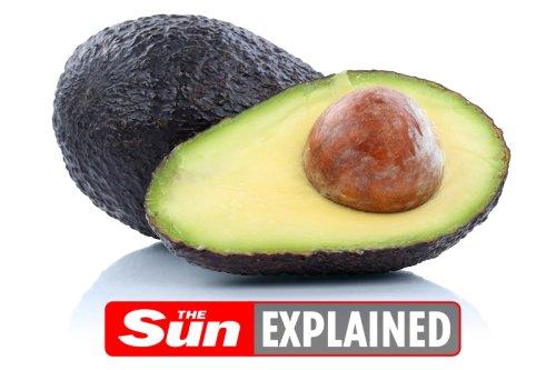 How do I grow avocado from seed?