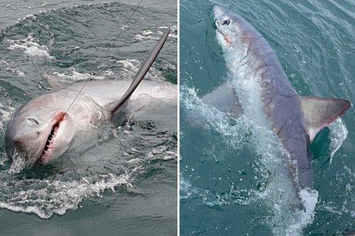 Fisherman reels in huge 7ft shark in hour-long battle off Devon coast