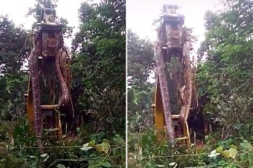 'World's biggest snake' so massive it has to be lifted by CRANE from bush lair