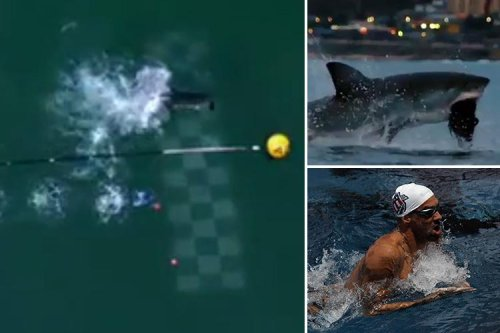 Olympian Michael Phelps loses out by SECONDS in race against a Great White shark