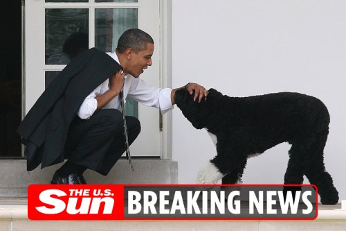 Barack Obama pays tribute to dog Bo following his death aged 12