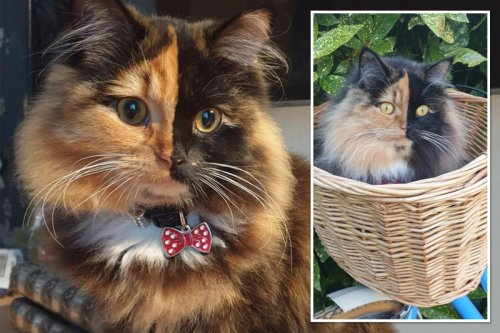 Adorable cat has rare birth defect - making her half black and half ginger