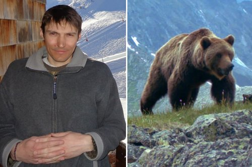 Camper EATEN by bear as pals watched on before walking 7 hours to find help