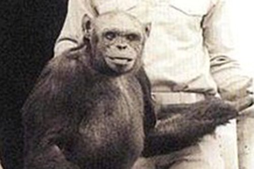 Inside bizarre world of human-chimp hybrids HUMANZEES as creature was 'born before being killed by scientists in 1920s'