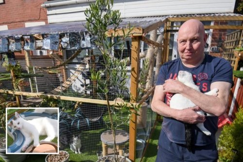 Couple fear £1,500 cat jungle gym fear it will be torn DOWN after complaints