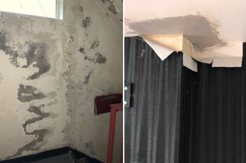 Couple stuck in 'nightmare' home with mouldy walls & TREE growing up chimney