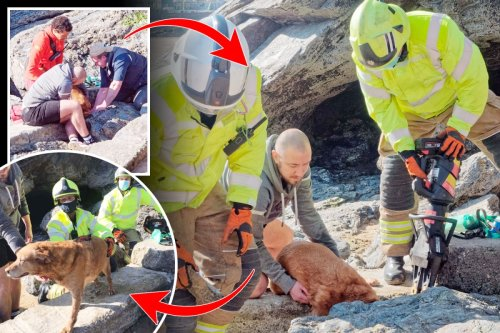 Firemen win fight against rising tides to save dog who got stuck hunting crabs