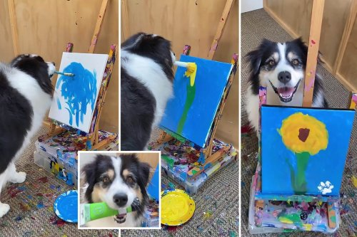 Talented pooch becomes an internet sensation with her pawsome paintings