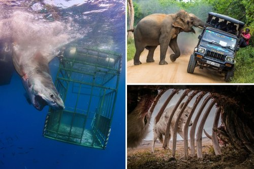 Incredible pics show shark attacking diving cage & elephant ramming tourists