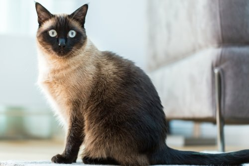 Cat dies of Covid after catching deadly bug from UK owner