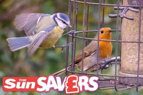 Springwatch's Iolo Williams on how to help your local wildlife for cheep