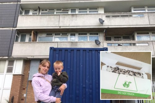 Mum & toddler placed in temporary council flat infested with COCKROACHES