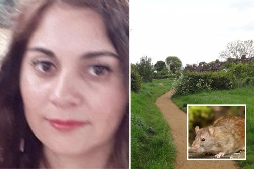 Mum 'attacked by more than 100 RATS' who chewed her arms and legs in park ambush