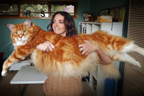 The World's Biggest Cats - How Many Do You Know?