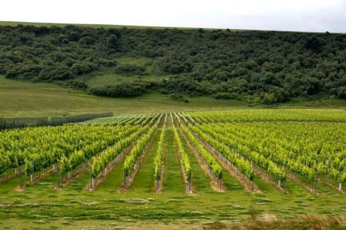 Sussex vineyards - a stay at Rathfinny Wine Estate