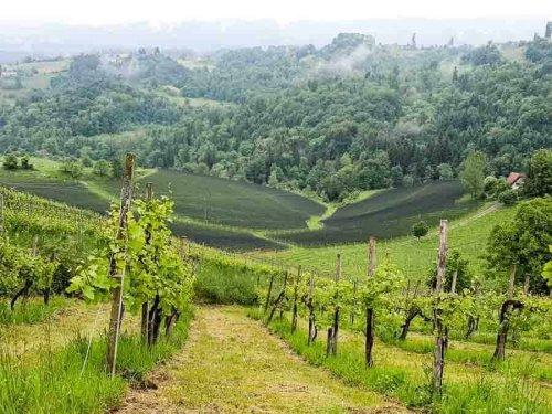 Südsteiermark, Austria   the South Styrian Wine Road