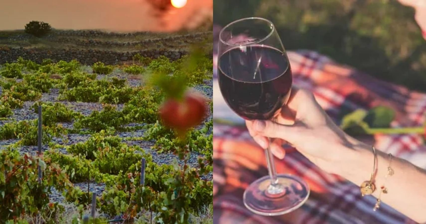 10 Best Wineries In Europe To Visit