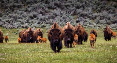 A Day At Bearizona: Arizona's Ultimate American Wildlife Safari