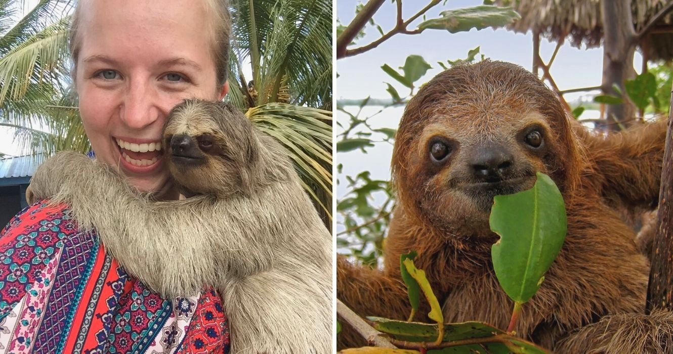 You Can Chill With Sloths At This Rainforest Resort In Costa Rica