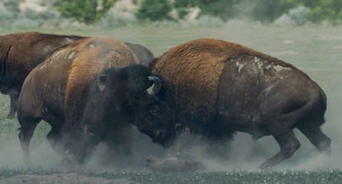 North Dakota: Why Theodore Roosevelt National Park And Badlands Are Worth It