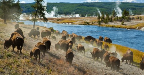 This Is What To See In Yellowstone If You Only Have One Weekend