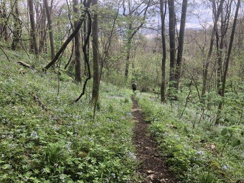 Days 46 through 50 on the Appalachian Trail