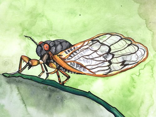 Our Wet, Hot Cicada Summer (in Culture)