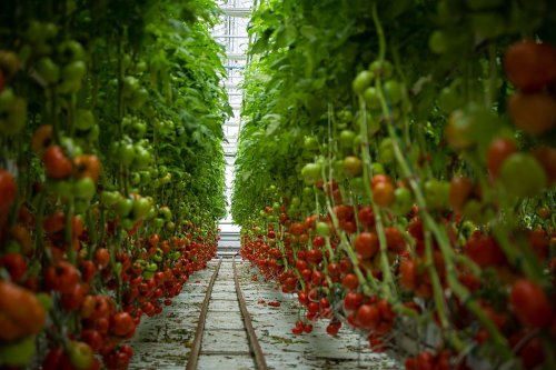 Let's Raise the Roof for Vertical Farming and Controlled Environment Agriculture - The Vine