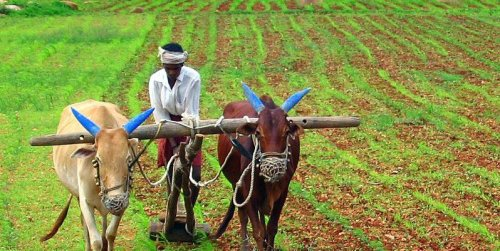Andhra Pradesh's Natural Farming Model Could Scale Up Sustainable Agriculture in India