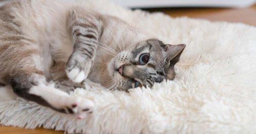 Adopting a New Cat Checklist