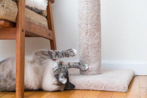 The Best Cat Scratchers