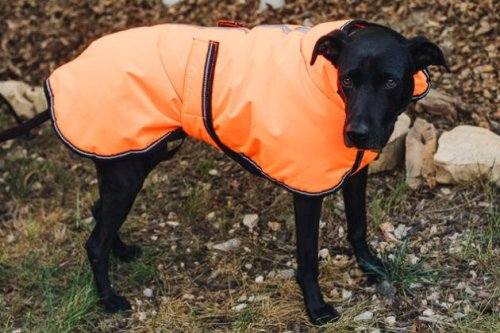 The Best Winter Jackets and Raincoats for Dogs