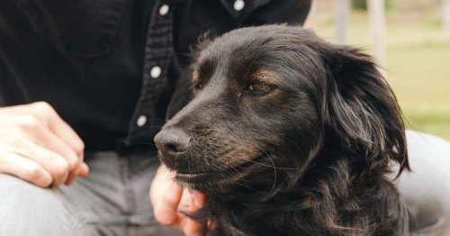 Adopting a New Dog Checklist