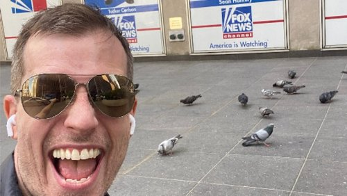 Meet the Comedian Who Turned Fox News Headquarters Into 'Safe Space' for Pigeons