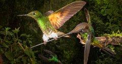 Discover birds and birding