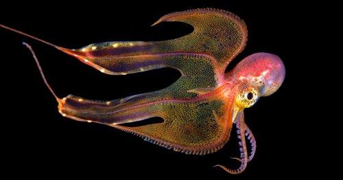 Underwater Photos Taken During Blackwater Dives Frame the Atlantic Ocean's Stunning Diversity
