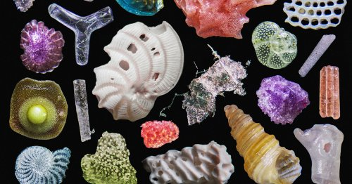 A Colorful Macro Photo of Beach Sand Reveals Infinitesimal Fragments of Coral, Quartz, Shells, and Plastic
