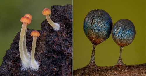 Fantastic Macro Photos Reveal the Microscopic World of Mushrooms and Slime Molds