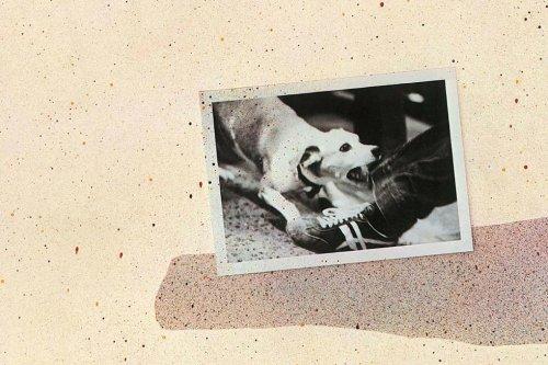 Tusk: Behind Fleetwood Mac's Album Of Elephantine Excess - Dig!