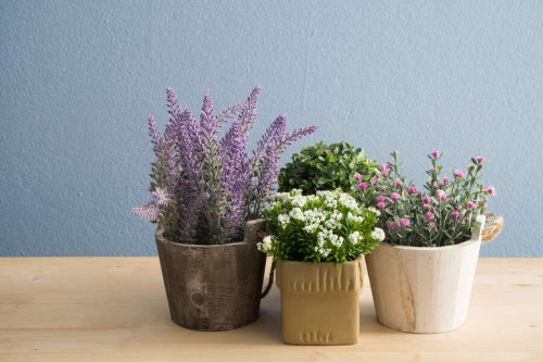 Impress Mom With These Beautifully Unique Plants and Flowers That Ship Quickly