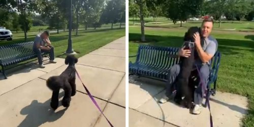 Dog Walking By Man On Bench Suddenly Realizes She Knows Him