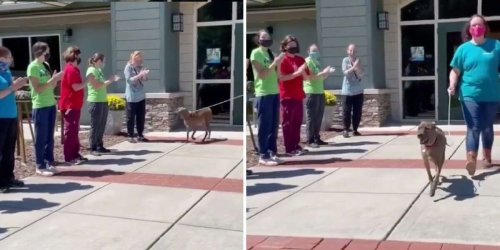Shelter's Longest Resident Gets A Standing Ovation As He Finally Finds A Home