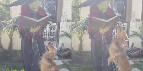 Dog Pulls Mom To See His New Best Friend Every Day In Hopes That She'll Finally Pet Him