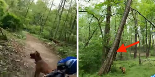 Guy On Forest Trail Notices His Dog Suddenly Stop — Then He Hears The Tiniest Meowing