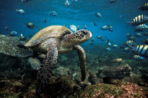 The Galapagos Islands & Ecuador Are Now Open to U.S. Travelers