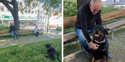 Sweet Rottweiler Comforts Stranger In Park Who Recently Lost His Dog